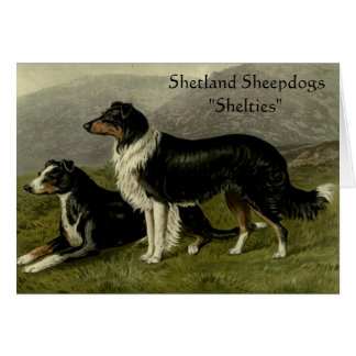 The Dog Series Greeting Card - Shelties