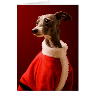 The dog wears Father Christmas's clothes Card