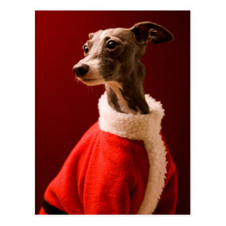 The dog wears Father Christmas's clothes Postcard