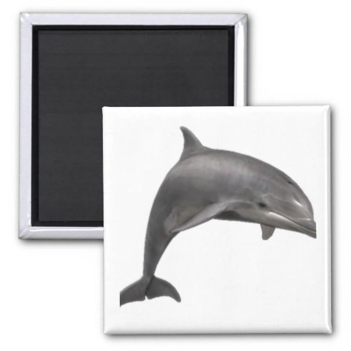 THE DOLPHINS LEAP REFRIGERATOR MAGNETS