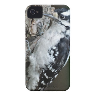 The Downey Woodpecker iPhone 4 Case-Mate Case