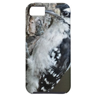 The Downey Woodpecker iPhone SE/5/5s Case