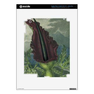 The Dragon Arum, engraved by Ward, from 'The Templ iPad 3 Skins