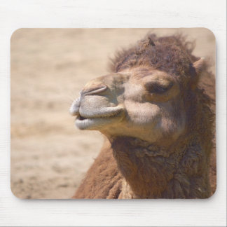 The dromedary camel - Mousepad