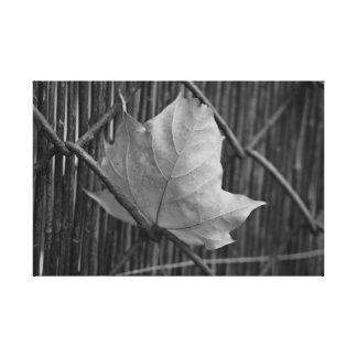The Dry Maple Leaf - Canvas