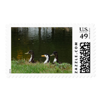 The Duck Squad Postage