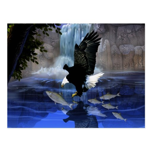 The eagle and the waterfall postcards