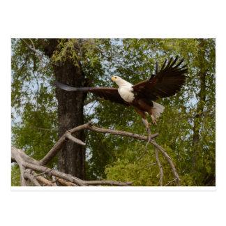 The Eagle Flies Tom Wurl Postcard