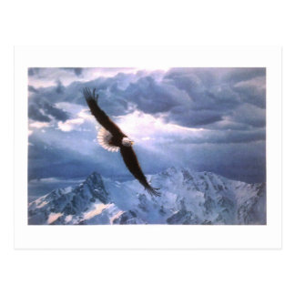 The Eagle Weathers the Storm Postcard