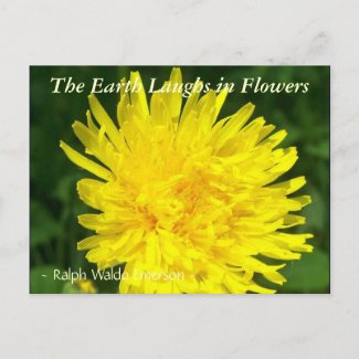 THE EARTH LAUGHS IN FLOWERS - 'DENTS DE LION' postcard