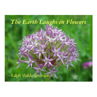 THE EARTH LAUGHS IN FLOWERS - LARGE ALLIUM POSTCARDS