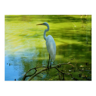 The Egret Post Cards