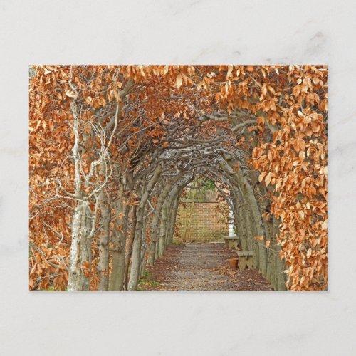 The Enchanted Path Postcard
