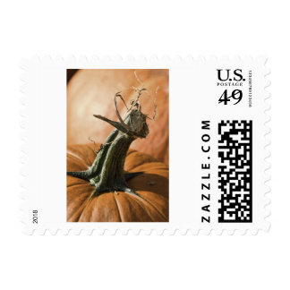 The End of the Pumpkin Season Postage
