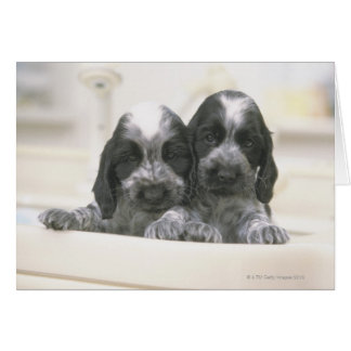 The English Cocker Spaniel is a breed of dog. It Card