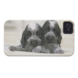 The English Cocker Spaniel is a breed of dog. It iPhone 4 Cases