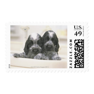 The English Cocker Spaniel is a breed of dog. It Postage