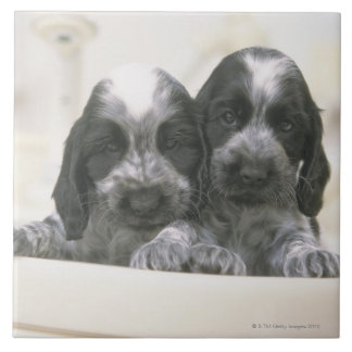 The English Cocker Spaniel is a breed of dog. It Ceramic Tiles
