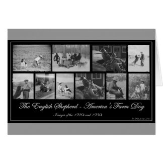 The English Shepherd - America's Farm Dog Card
