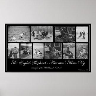 The English Shepherd - America's Farm Dog Poster