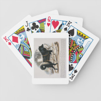 The Esquimaux Dog (Canis familiaris) educational i Bicycle Playing Cards