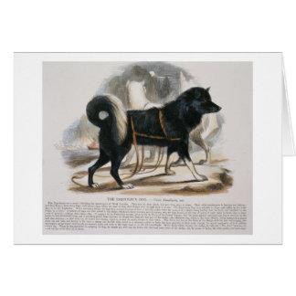 The Esquimaux Dog (Canis familiaris) educational i Card