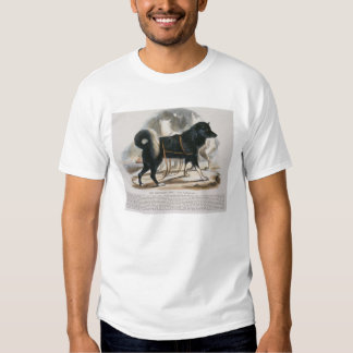The Esquimaux Dog (Canis familiaris) educational i T Shirt