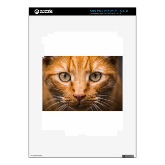 The Essence of a Cat's Look Skins For iPad 3