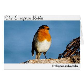 The European Robin Greeting Card