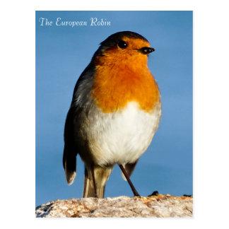 The European Robin Postcard