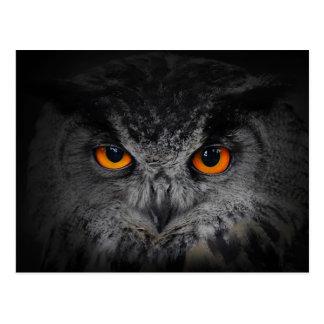 The Evil Eyes. ( Eagle Owl, Bubo Bubo) Postcards