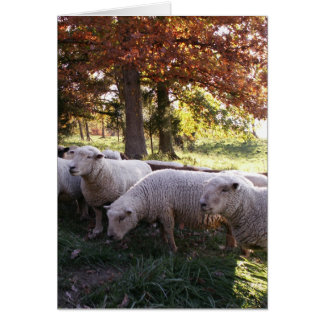 The Ewes Greeting Card