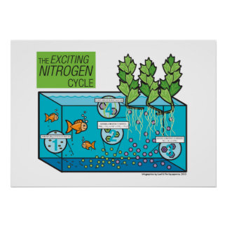 The Exciting Nitrogen Cycle Poster
