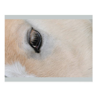 The eye of a Haflinger Rare Breed Pony Postcard