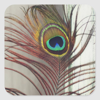 THE EYE or Resting Peacock Feather Square Sticker