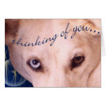 The eyes have it! greeting cards