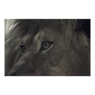 The eyes of the Lion 2 Print