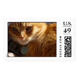 the face of fancy feast postage