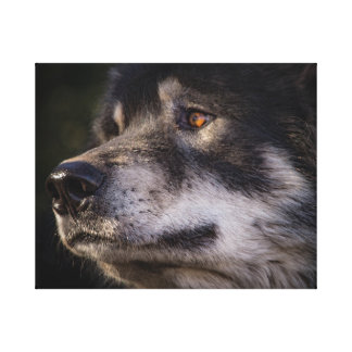The Face of the Wolf Canvas Print
