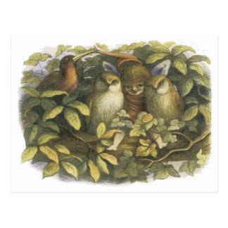 The Fairyland,1870 Fairy With Owls Postcard