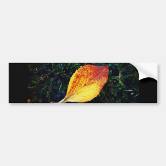 The Fallen Leave Bumper Sticker