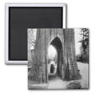 The Famous Bicycle Tree of Snohomish 2 Inch Square Magnet