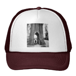 The Famous Bicycle Tree of Snohomish Trucker Hats