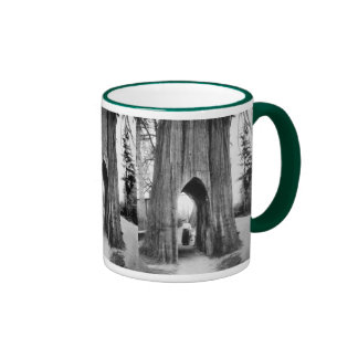 The Famous Bicycle Tree of Snohomish Ringer Coffee Mug