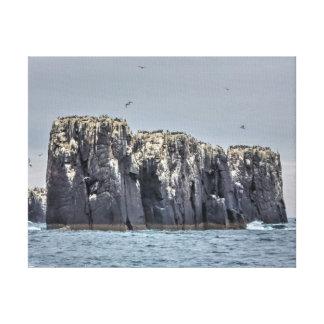 The Farne Island cliffs Canvas Print