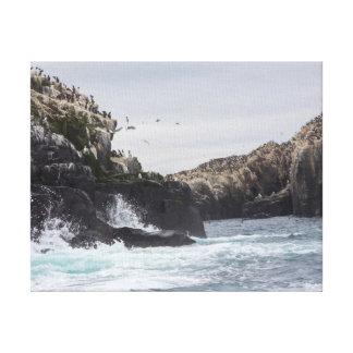 The Farne Islands Canvas