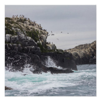 The Farne Islands cliffs poster