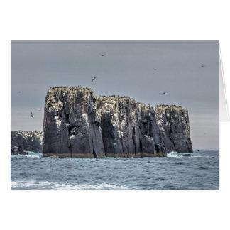 The Farne Islands greeting card