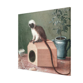 The Favourite Monkey of Carl Linnaeus Canvas Print