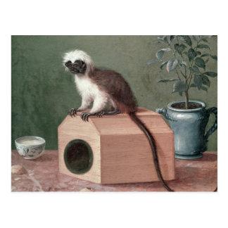 The Favourite Monkey of Carl Linnaeus Postcard